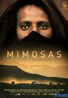 Mimosas full movie
