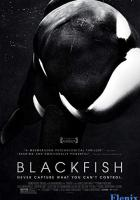 Blackfish full movie