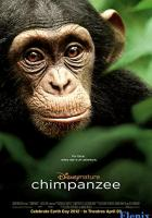 Chimpanzee full movie