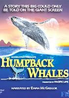 Humpback Whales full movie