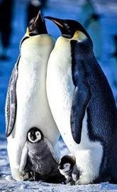 Snow Chick: A Penguin's Tale full movie