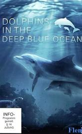 Dolphins in the Deep Blue Ocean poster