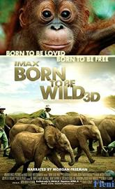Born to Be Wild full movie